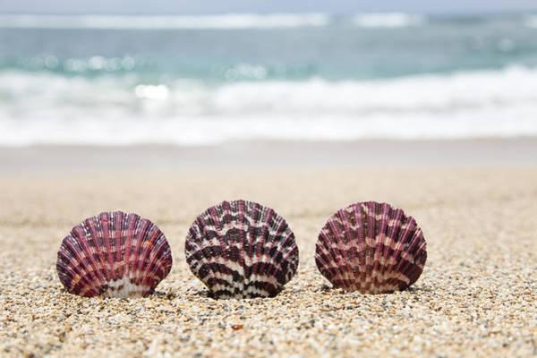 Three Seashells Photograph - Scallop Shells On Beach by Brandon Tabiolo