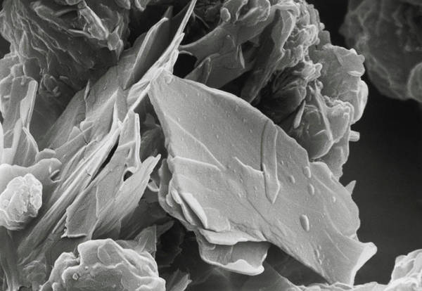 Wall Art - Photograph - Scanning Electron Micrograph Of Cocoa Powder by Microfield Scientific Ltd/science Photo Library