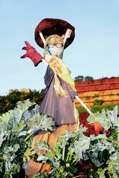 Kale Photograph - Scarecrow by Cordelia Molloy/science Photo Library