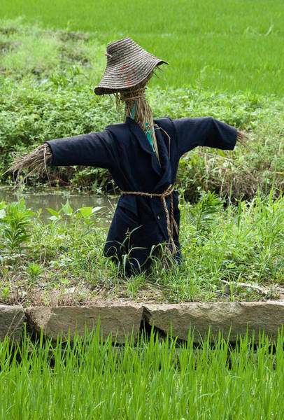 Photograph - Scarecrow In A Rice Paddy In Wuzhen China. by Rob Huntley