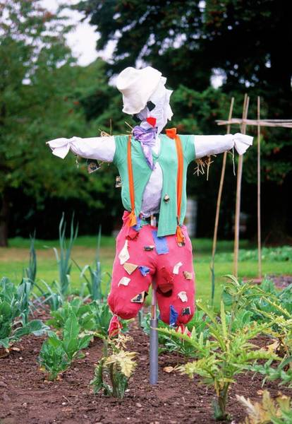Biological Pest Control Photograph - Scarecrow by Tony Wood/science Photo Library