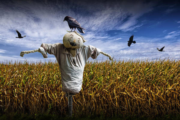 Photograph - Scarecrow With Black Crows Over A Cornfield by Randall Nyhof