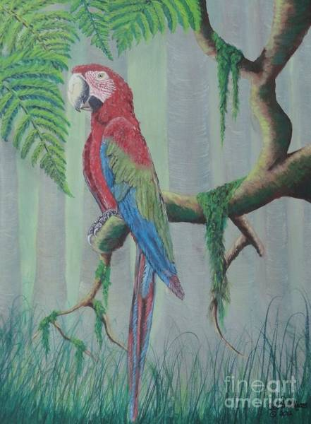Painting - Scarlet Macaw by Bob Williams
