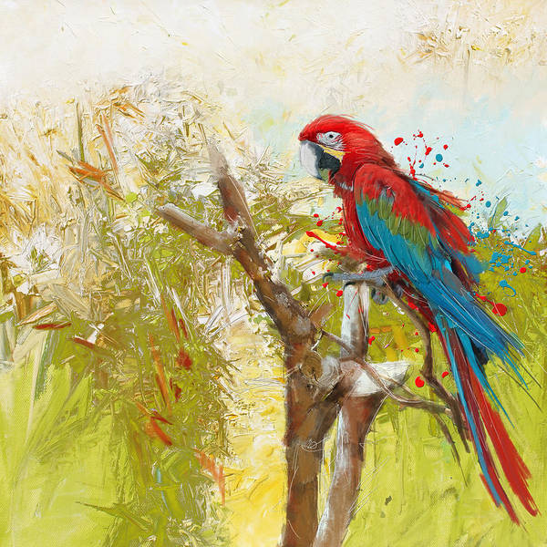 Canaries Painting - Scarlet Macaw by Catf