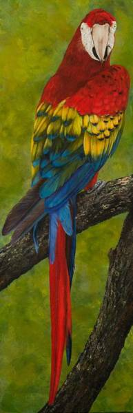 Painting - Scarlet Macaw by Nancy Lauby
