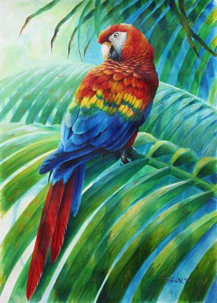 Painting - Scarlet Macaw On Palm by Christopher Cox