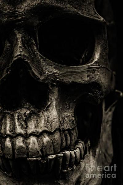 Photograph - Scary Skull by Edward Fielding