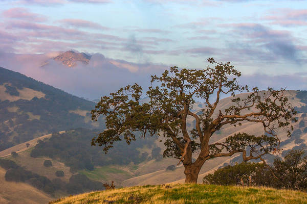 Mt. Diablo Wall Art - Photograph - Scattered Clouds At Sunrise by Marc Crumpler