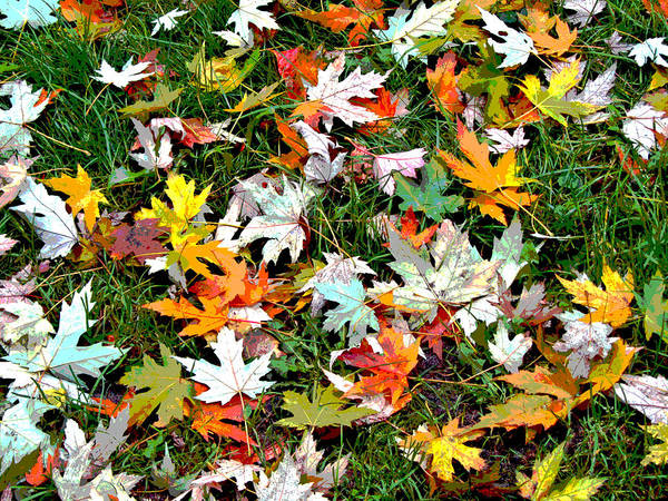 Posterize Photograph - Scattered Leaves by Mariola Szeliga