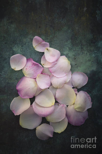 Photograph - Scattered Rose Petals by Maria Heyens