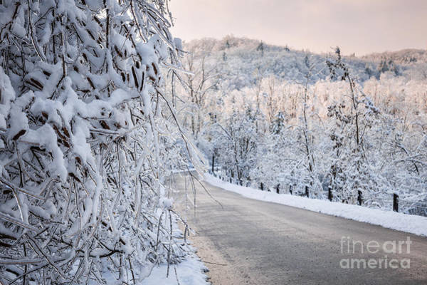 Photograph - Scenic Road In Winter Forest by Elena Elisseeva