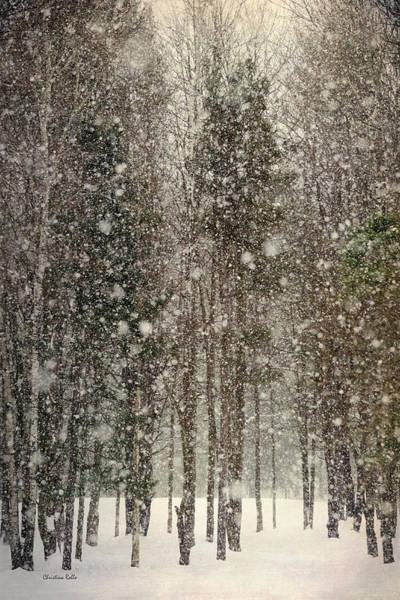 Photograph - Winter Wonderland by Christina Rollo