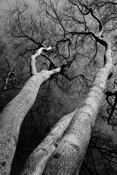 Wall Art - Photograph - Scenic Trees by David Pyatt