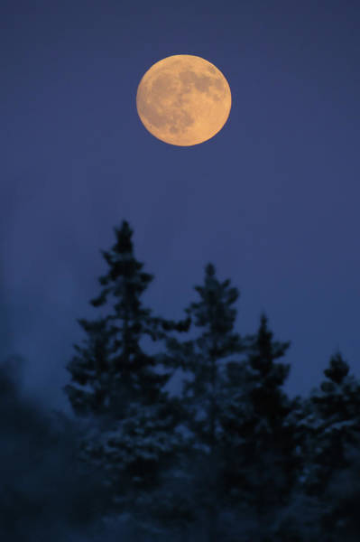 Wall Art - Photograph - Scenic View Of Full Moon On Treetop In by Mats Andersson
