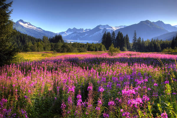 Fireweed Photograph - Scenic View Of The Mendenhall Glacier by Michael Criss