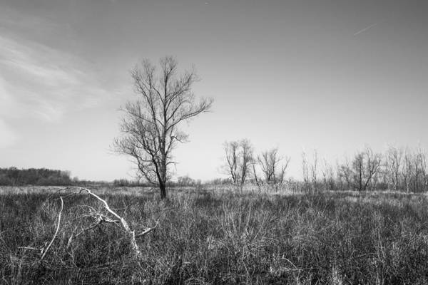 Photograph - Scenic Wetlands by Dale Kincaid