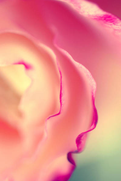Wall Art - Photograph - Scents Of   Summer by Beata  Czyzowska Young