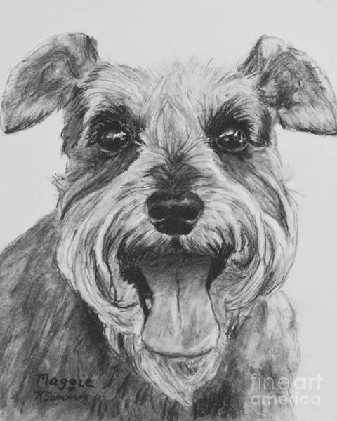 Drawing - Schnauzer Dog Print by Kate Sumners