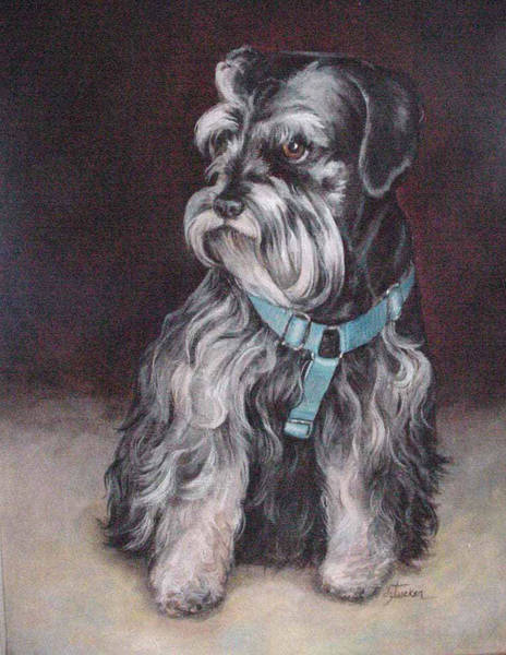 Painting - Schnauzer by Donna Tucker