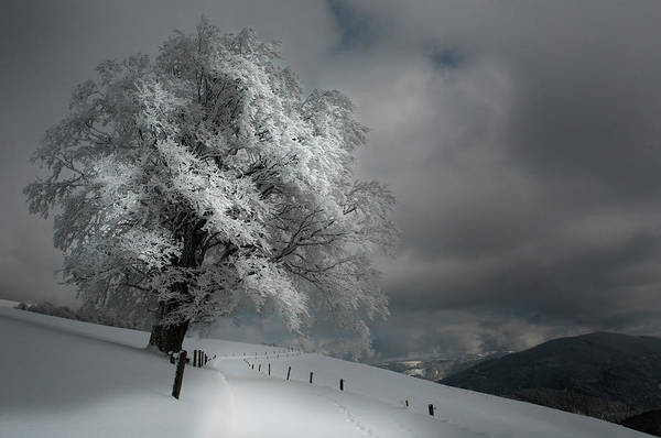 Wall Art - Photograph - Schneeweg by Nicolas Schumacher