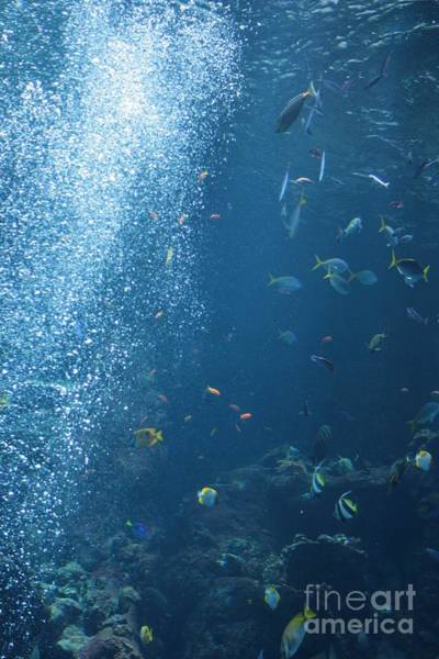 Photograph - School Of Fish by Cynthia Marcopulos