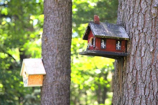 Photograph - Schoolhouse For The Birds by Gordon Elwell