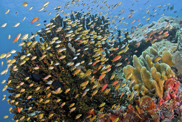 Wall Art - Photograph - Schooling Fish Swim Past Reef Corals by Jaynes Gallery