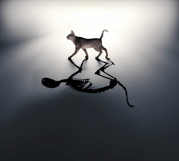 Paradox Photograph - Schrodinger's Cat by Andrzej Wojcicki