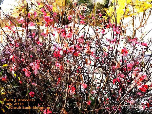 Special Offer Painting - Schrub Bush Blooming by Gert J Rheeders