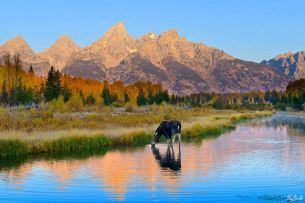 Photograph - Schwabacher Morning Light  by Greg Norrell