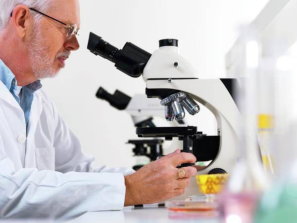 Examine Photograph - Scientist Using A Light Microscope by Tek Image/science Photo Library