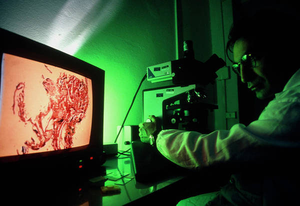 Microscope Wall Art - Photograph - Scientist Using Light Microscope With Monitor by Klaus Guldbrandsen/science Photo Library