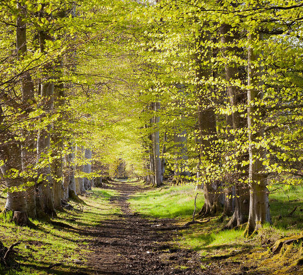 Photograph - Scotland Grove by Brian Grzelewski