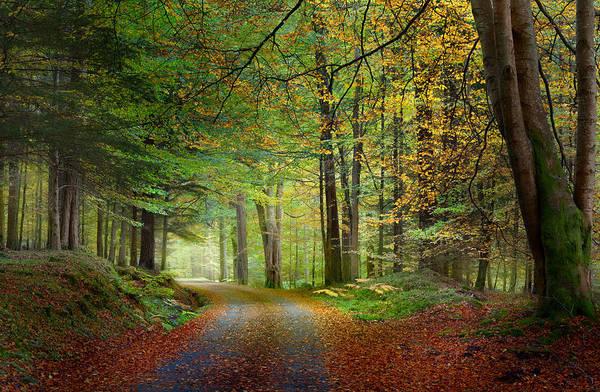 Photograph - Scotland In Autumn by Brian Grzelewski