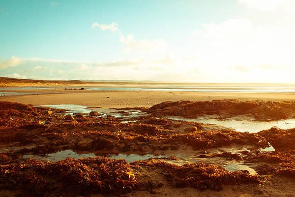 Kelp Photograph - Scottish Beach by Tom Gowanlock