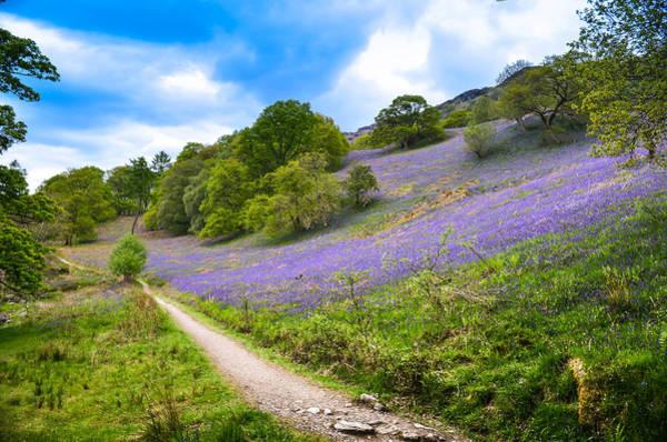 Scottish Bluebells On The Hillside Art Print by Alex Zorychta