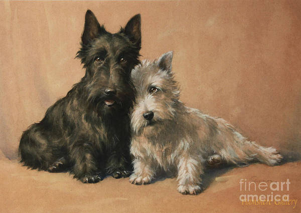 Wall Art - Painting - Scottish Terrier by Christopher Gifford Ambler