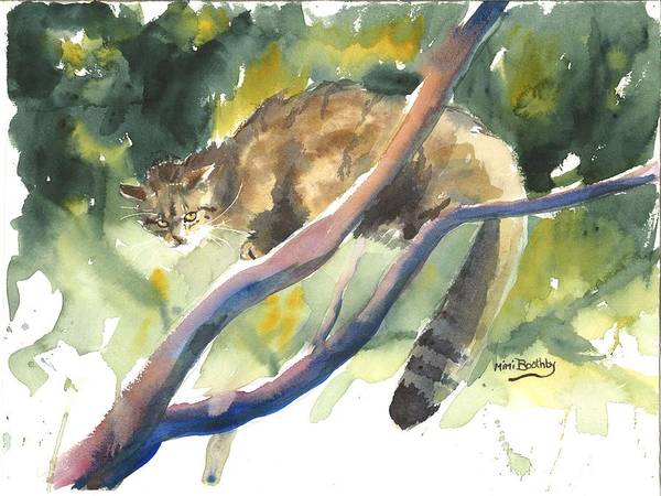 Scottish Wild Cat In A Tree Art Print