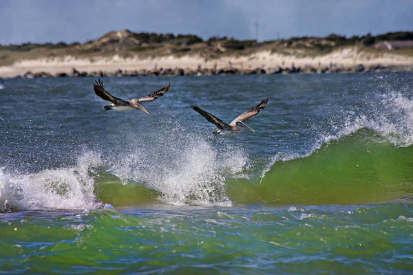 Brown Pelicans Wall Art - Photograph - Scouting For A Catch by Betsy Knapp
