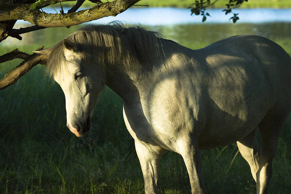 Hessen Photograph - Scraping Horse In Warm Light by Andy-Kim Moeller