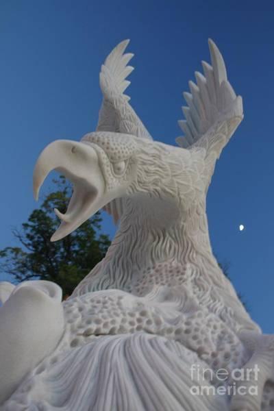 Photograph - Screaming Eagle by Tony Baca