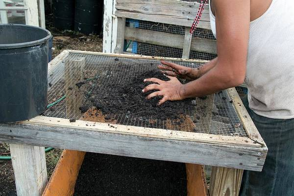 Security Service Photograph - Screening Compost For Gardening by Jim West