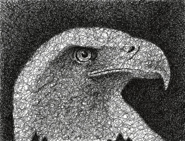 Ink Pen Drawing - Scribble Eagle by Nathan Shegrud