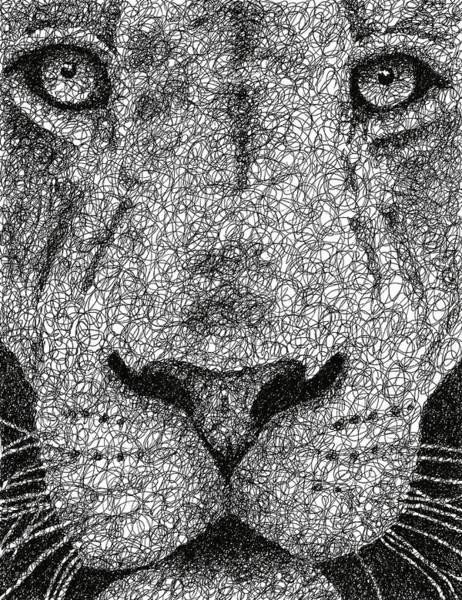 Wall Art - Drawing - Scribble Lion by Nathan Shegrud