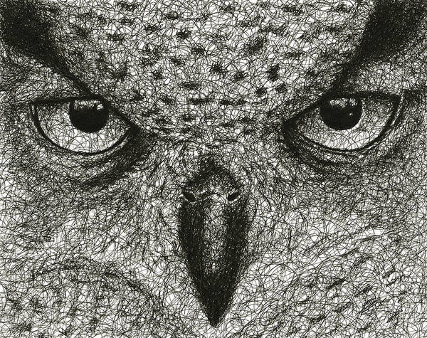 Nocturnal Drawing - Scribble Owl by Nathan Shegrud