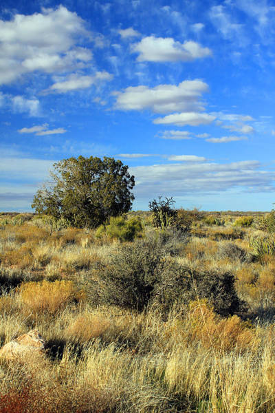 Photograph - Scrubland by Jennifer Robin