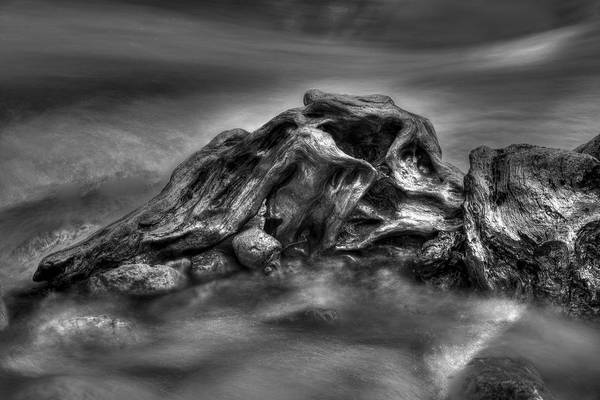 Photograph - Sculpture By Nature Bw by Ivan Slosar