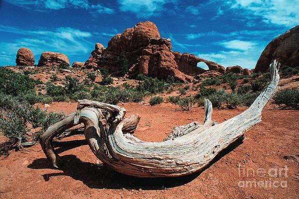 Photograph - Sculpture Wilderness Landscape by Kim Lessel