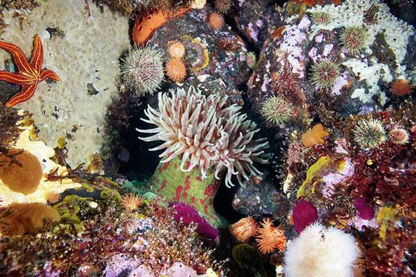 Biodiverse Wall Art - Photograph - Sea Anemones And Marine Life by Alexander Semenov/science Photo Library