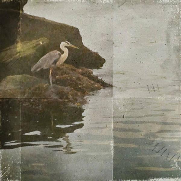 Photograph - Sea Bird by Kevin Bergen
